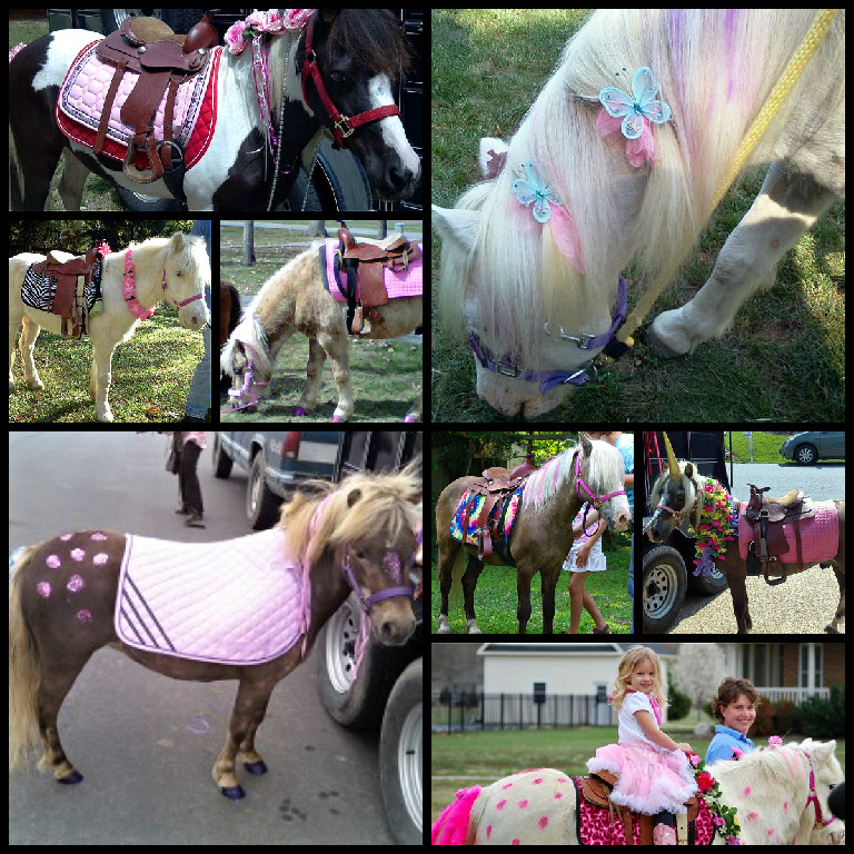 Pony Rides for Pony Birthday Parties in Virginia | The Teeny