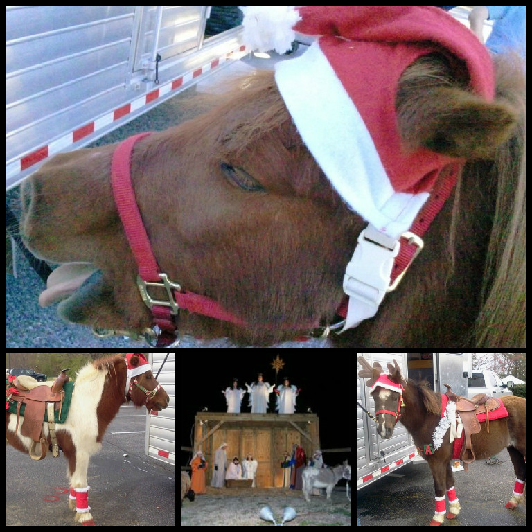 Adorable And Safe Ponies For Backyard Pony Parties Event Rides Non Profit Organization In The Hampton Roads Areas Richmond
